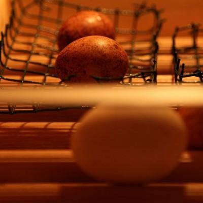 Eier in der Brutmaschine