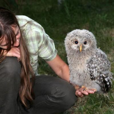 Auf der Hand der Falkner-Mama ist es doch am schönsten!